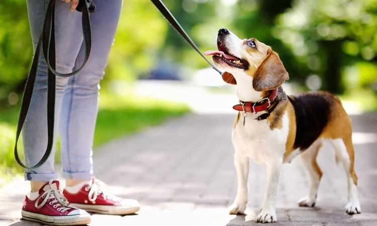 他人の犬を許可なしに触ることの危険性