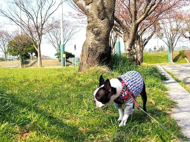 散歩中に犬が臭いを嗅ぐのは危険なの?ルールを決めて問題を回避しよう