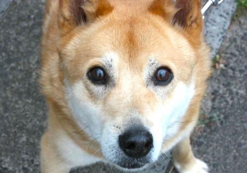 オキシトシンとは愛犬と見つめ合うことで分泌される「愛情ホルモン」(まとめ)
