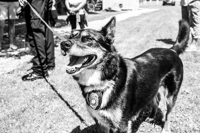 殺処分2時間前に救われた犬が7年後に奇跡を起こす!