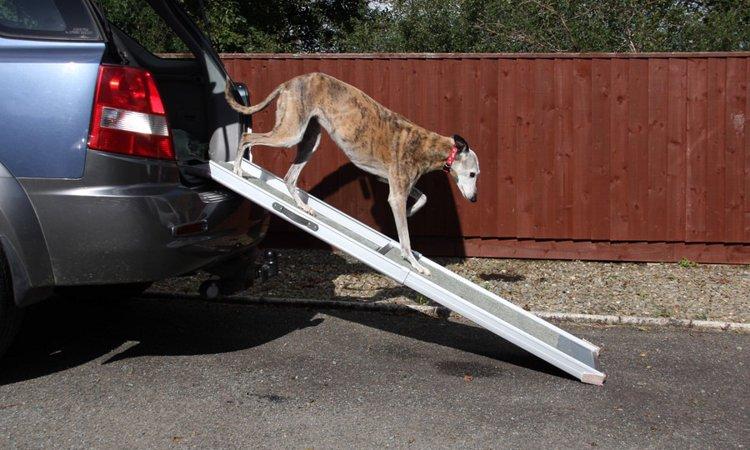 犬用スロープについて ~選び方と使い方~
