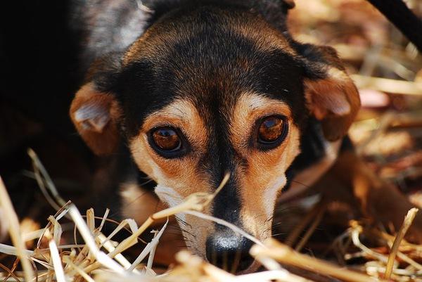 犬のてんかん~ 原因から予防・治療法まで~
