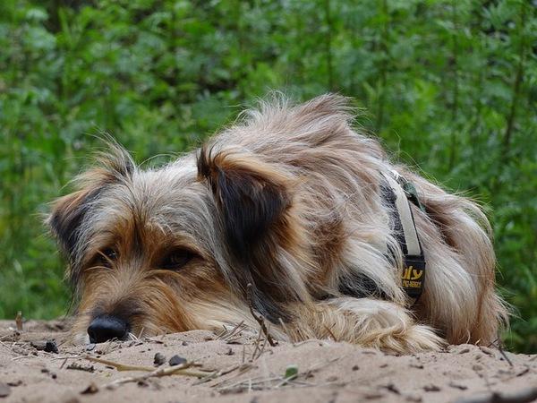 犬の膀胱炎の症状とその原因について