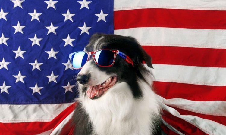 アメリカで人気のある犬種ランキングTOP5