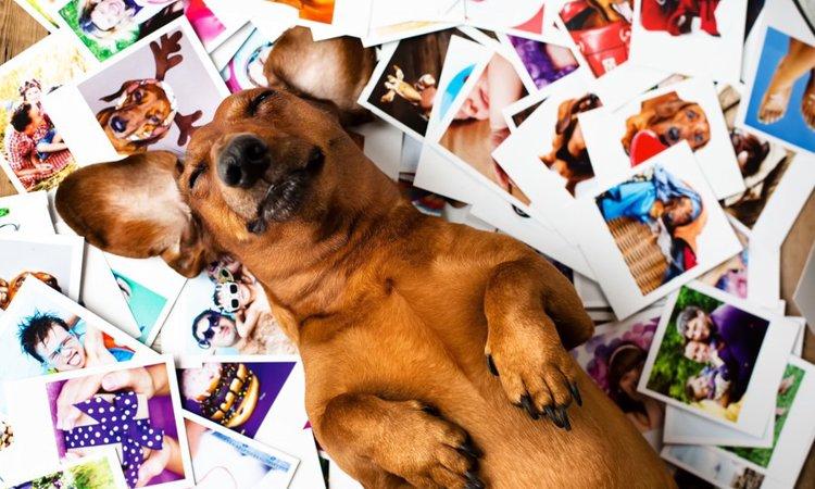 Instagramで愛犬を人気者にするコツ5つ!