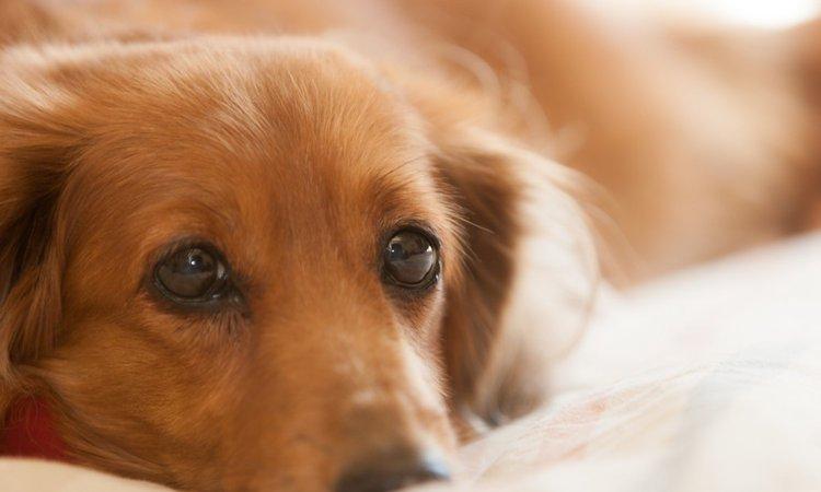 犬の寿命が人間よりも短い理由とは?