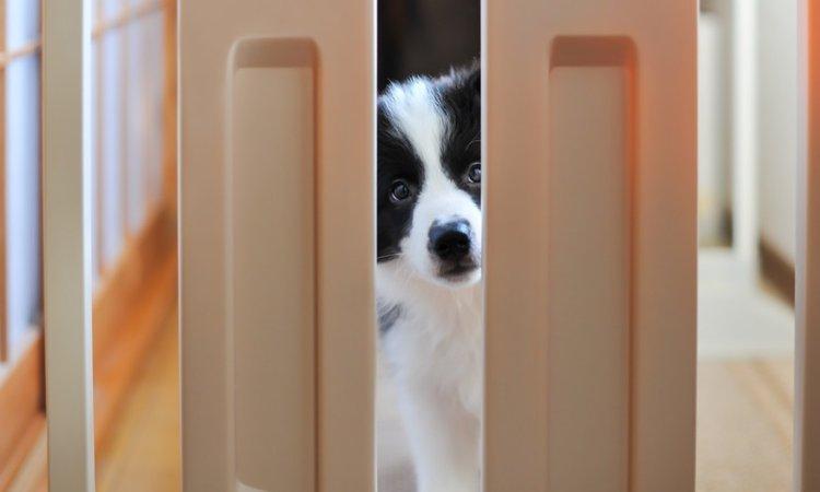 愛犬をお留守番させるときの注意点
