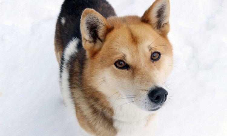 雑種犬ならではの3つの魅力と飼う時の注意点