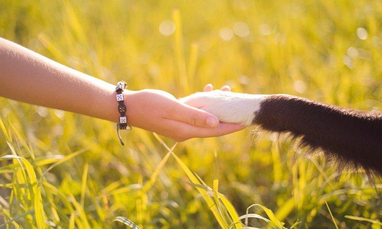 「動物が好きだから」動物看護師になりたいあなたへ