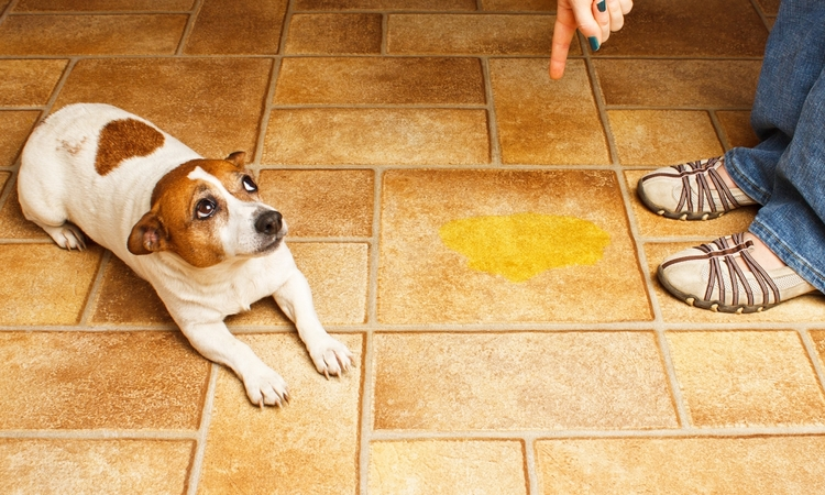 犬がトイレ以外でオシッコした!そんな時の犬の心理って?