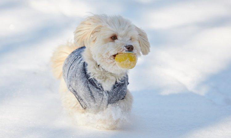 初めての雪で大はしゃぎするワンコが可愛すぎる♡