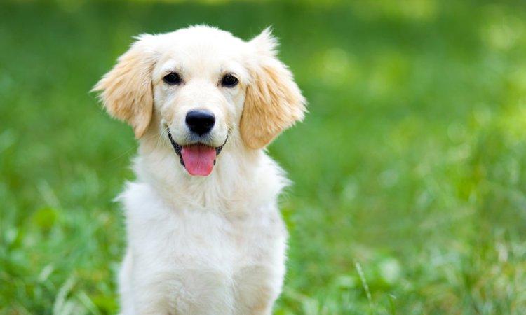 犬を飼うことでもたらされるプラスなこと6つ