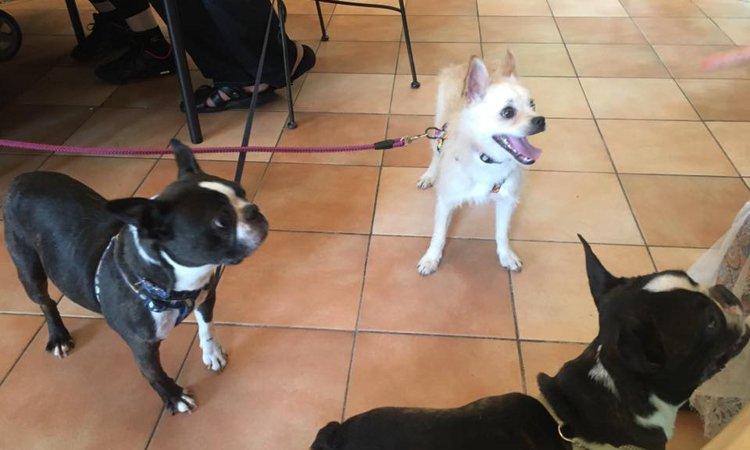 犬好きにはたまらない!画期的な複合保護犬施設『出逢いの森』誕生!