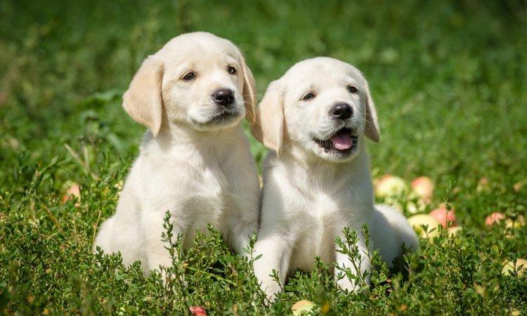 犬も喉を鳴らす?犬がゴロゴロと喉を鳴らす時の気持ち