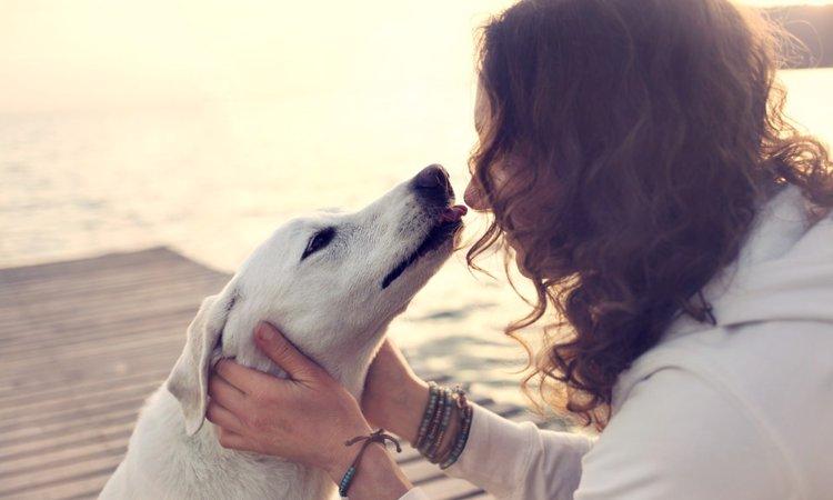 愛犬が「一緒にいて幸せ」だと思える飼い主の4つの心得