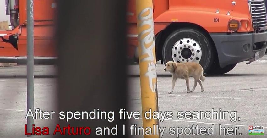 恐怖心でいっぱいの野良犬が、保護されて人を大好きになるまで(動画)
