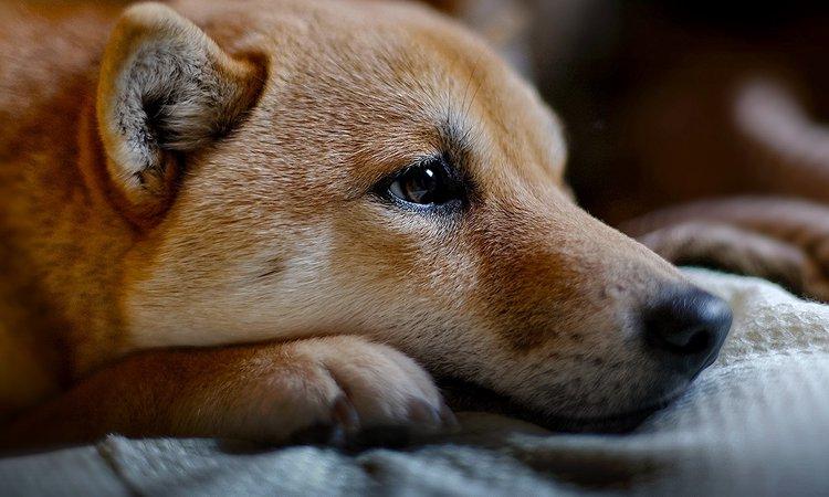 犬が衰弱しているときに見せる7つの仕草や行動
