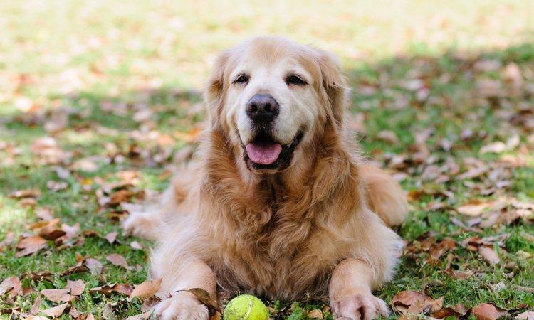 避けられない愛犬の老化。飼い主が考えるべき「覚悟」について。