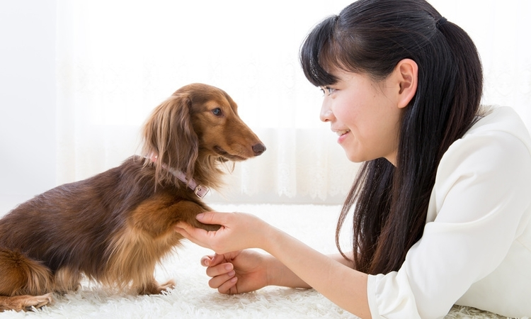 一人暮らしで犬を飼う準備から育て方について