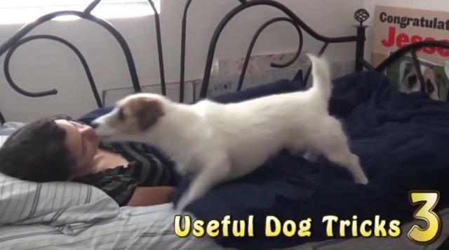 世界一賢い犬としてギネスにのったワンコの1日がすごい(まとめ)