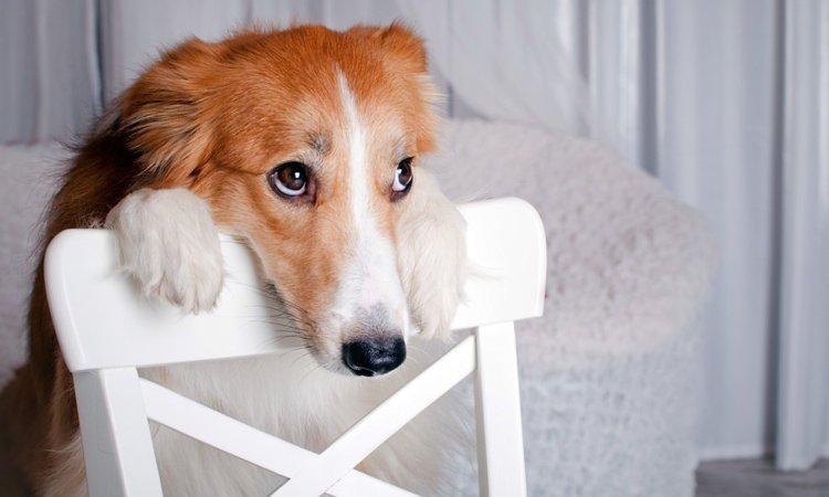 犬が落ち込んでるときに見せる5つのしぐさ