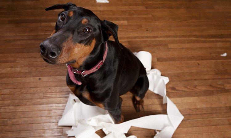 犬が言うことを聞いてくれない3つの理由