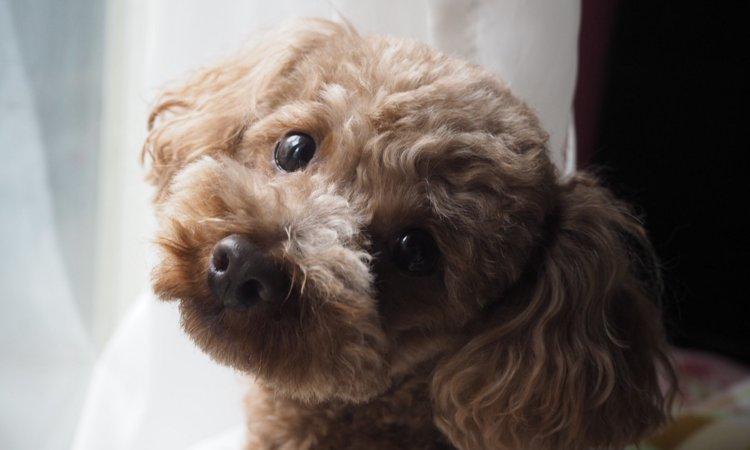 小型犬は散歩に行かなくてもいいの?