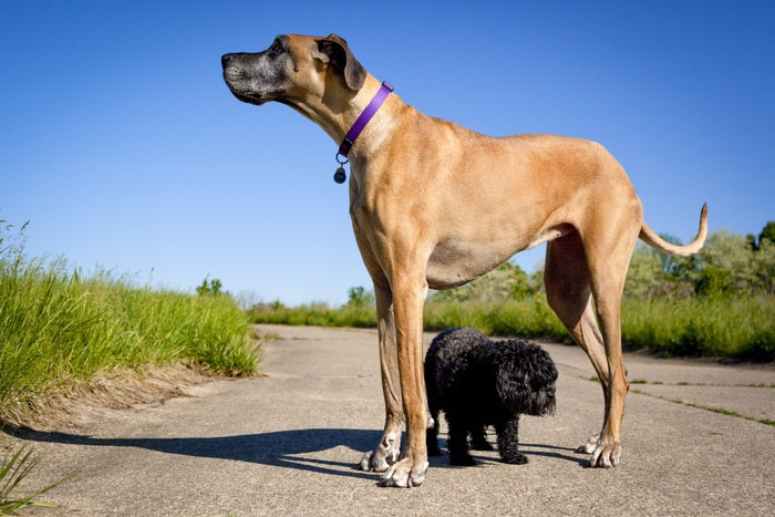 What Does F And Fb Mean In Dog Breeding