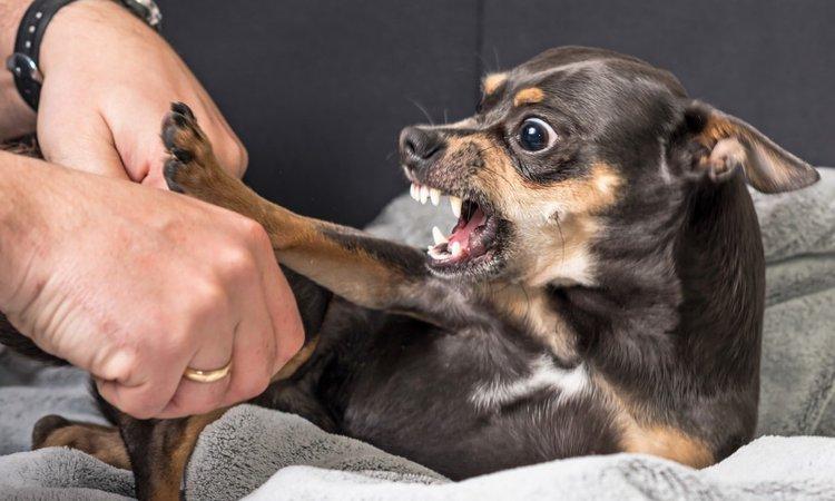 触ると怒る犬への接し方とは?しつけ方や解決方法