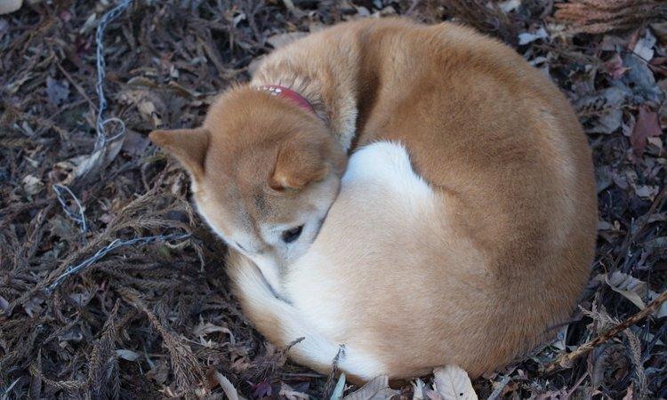 犬の寒さ対策 防寒方法や外で飼う時の注意点