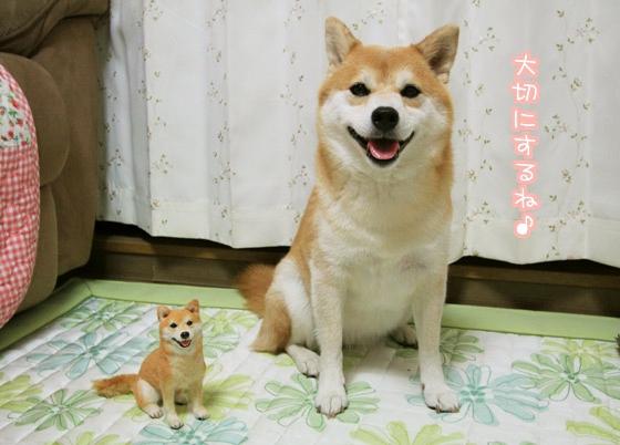 犬友にプレゼントしたいおすすめ商品!