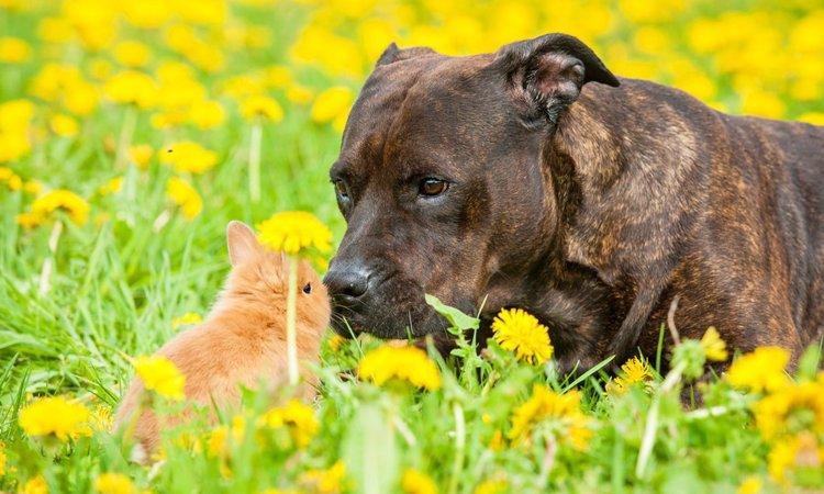 犬とウサギは同居できる?一緒に暮らす際の注意点