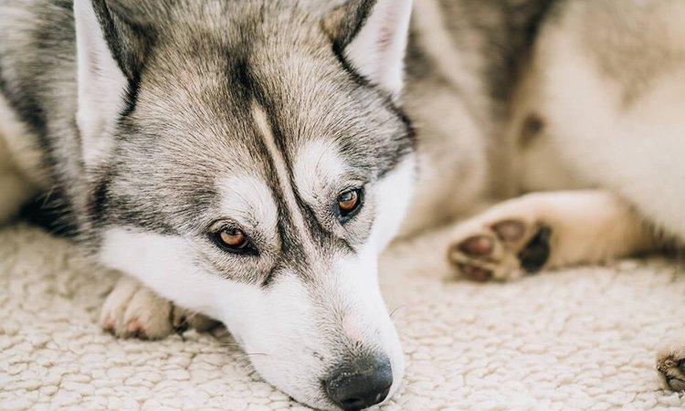 【元動物看護師体験談】安易に安楽死を求める飼い主