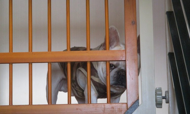 これで安心!留守中の犬の事故防止対策をしよう