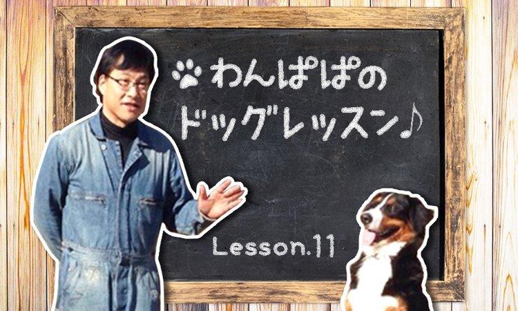 わんぱぱのドッグレッスン♪Lesson11〜お留守番トレーニング 基本編の巻〜