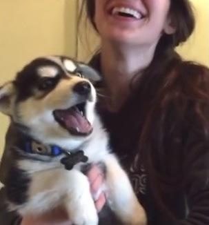 まるで人間の子供!?話をしているかのようなハスキーの子犬にキュン♡(動画)