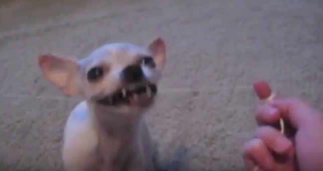 ワンコは歯が命?自ら進んでフロスをするワンコさんが可愛い♡(動画)
