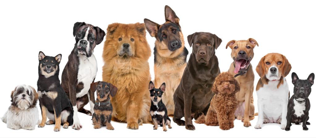 しっかり環境を考えて決めよう!愛犬を選ぶ時のポイント5つ