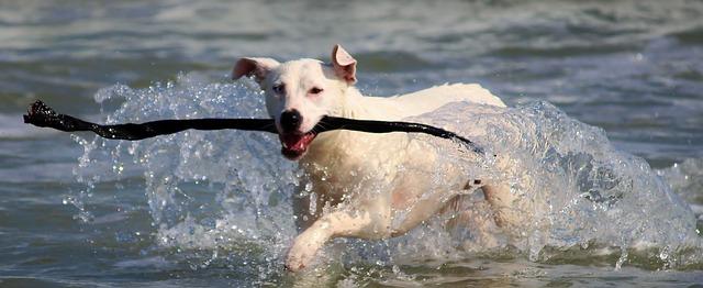 犬と海に行く際の注意点