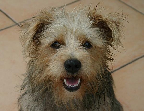 犬の笑顔に隠された本当の意味とは