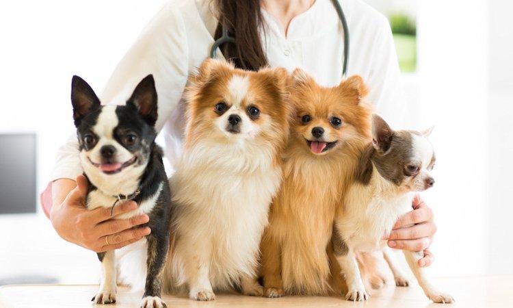 どうして?動物看護師が犬の「避妊・去勢手術」を勧める理由