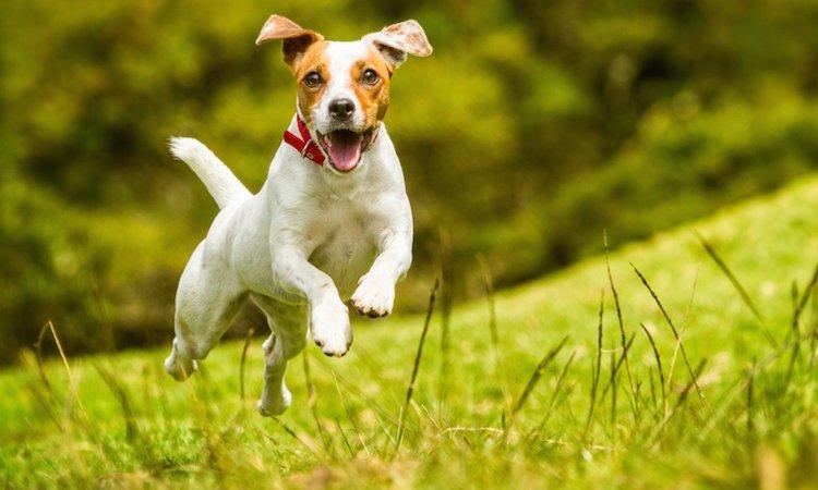 犬が『楽しいね!』と飼い主に伝えている時のサイン6つ