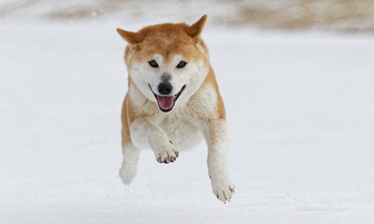 なぜ雪が大好きな犬と苦手な犬がいるの?