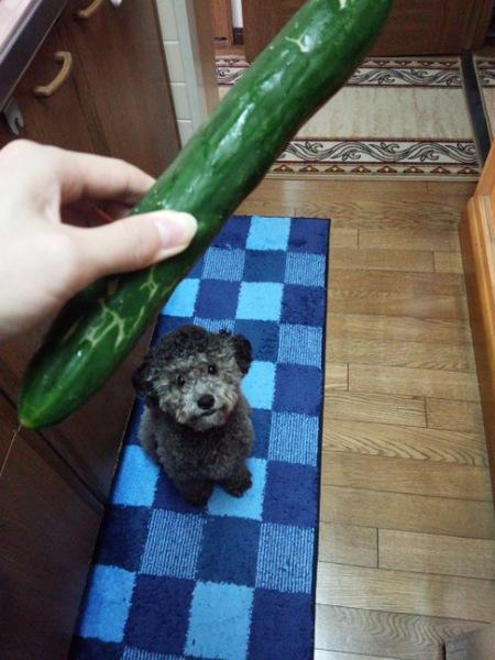 愛犬に与えたい野菜7選!
