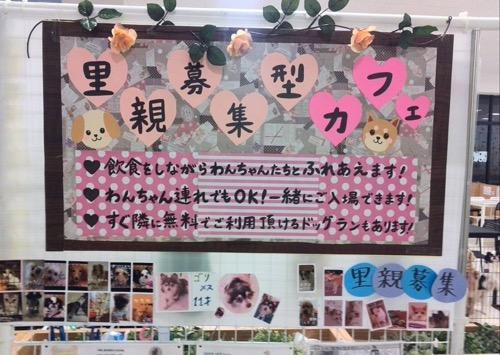 犬カフェでわんちゃんとのふれあい!話題の関東のお店12選♪(まとめ)