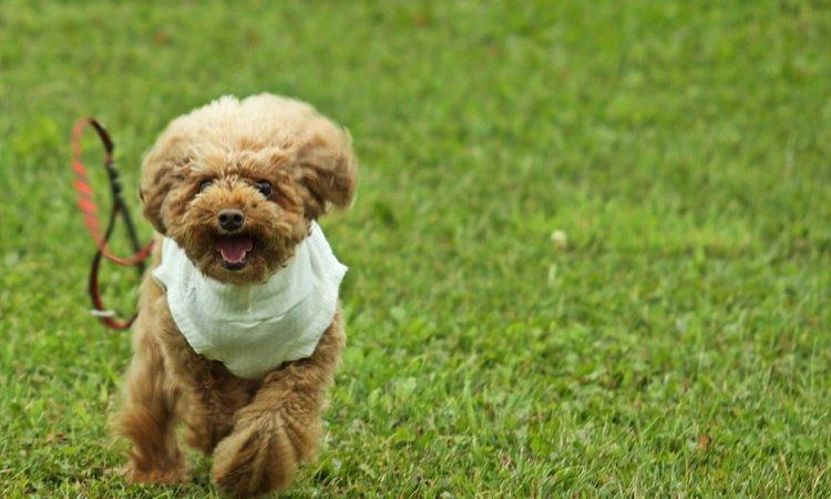 オリンピックで軍用犬が脱走!覚えておきたい「犬が脱走をしてしまう理由」