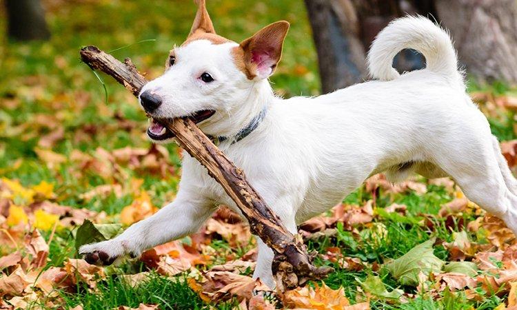 愛犬を木の枝で遊ばせてはダメ! 怪我や病気の可能性あり!