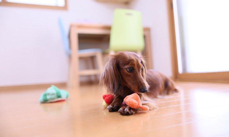 おススメ!100均で揃えられる犬用品・便利グッズ
