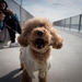 犬のマウンティングをやめさせたい!