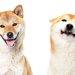犬の耳の向きや動きでわかる気持ち5選